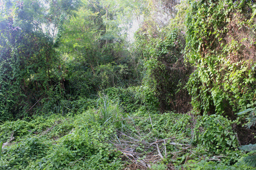 Garden clearance services from Call2Collect